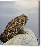 Pondering Toad Canvas Print