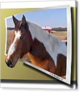 Pony Posing Canvas Print