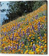 Poppies And Lupine Flowers Blanket Canvas Print