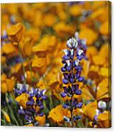 Poppies And Lupine Flowers In A Santa Canvas Print