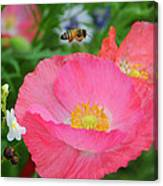 Poppies And Pollinator Canvas Print