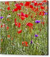 Poppies And Purple Flowers Canvas Print