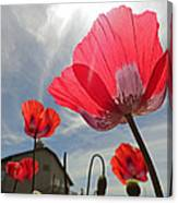 Poppies And Sky Canvas Print