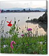 Poppies By The River Canvas Print