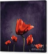 Poppies Fun 02b Canvas Print
