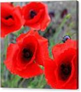 Poppies Of Stone Canvas Print