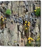 Poppies On The Cliff Canvas Print