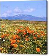 Poppies Over The Mountain Canvas Print