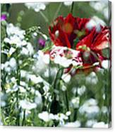 Poppy And White Flowers Canvas Print