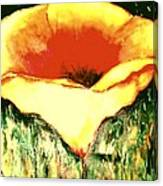 Poppy Cup Of Gold  Canvas Print