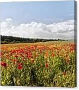 Poppy Field II Canvas Print