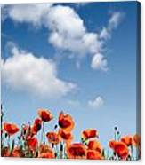 Poppy Flowers 04 Canvas Print