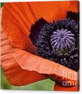 Poppy For Peace Canvas Print