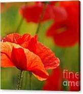 Poppy Love 2 Canvas Print