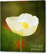 Poppy Of White Canvas Print