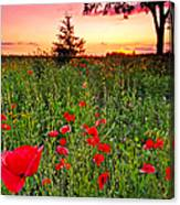 Poppy Patch And Previsualization Canvas Print