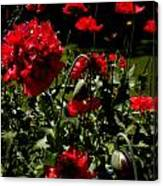 Poppy Pompom Canvas Print