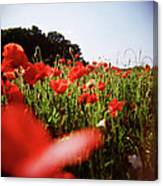 Poppy Stars Canvas Print