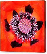 Poppy's Heart Canvas Print