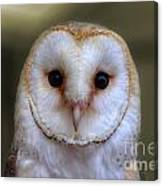 Portrait Of A Barn Owl Canvas Print