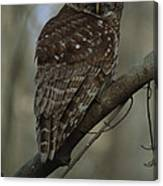 Portrait Of A Barred Owl Perched Canvas Print