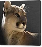Portrait Of A Cat Canvas Print