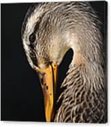 Portrait Of A Duck Poster Canvas Print