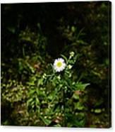 Portrait Of A Flower Canvas Print