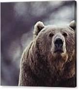 Portrait Of A Kodiak Brown Bear Canvas Print