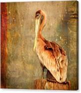 Portrait Of A Pelican Canvas Print