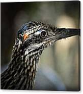 Portrait Of A Roadrunner  Canvas Print