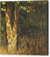 Portrait Of A Tree Trunk Canvas Print