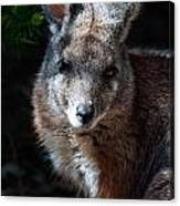 Portrait Of A Wallaby Canvas Print