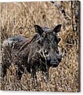 Portrait Of A Warthog Canvas Print