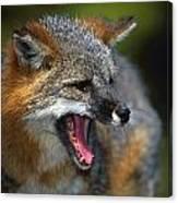Portrait Of Gray Fox Barking Canvas Print