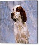 Portrait Of Irish Red And White Setter Canvas Print