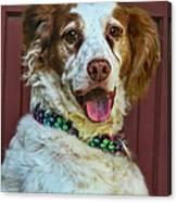 Portrait Of Springer Spaniel Dog Canvas Print
