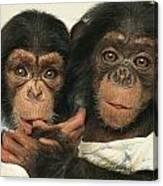 Portrait Of Two Young Laboratory Chimps Canvas Print