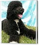 Portugese Water Dog 768 Canvas Print