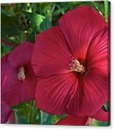 Potchen's Hibiscus Canvas Print