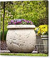 Pots Of Pansies Canvas Print