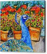 Potted Peacock Canvas Print