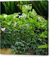 Potted Shades Of Green Canvas Print