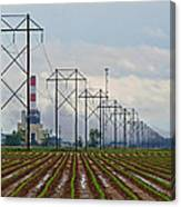 Power And Plants I  Canvas Print