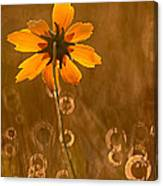 Prairie Coreopsis And Dewdrops Canvas Print