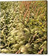 Prairie Crop With Weeds Canvas Print