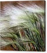 Prairie Grass, Badlands National Park Canvas Print
