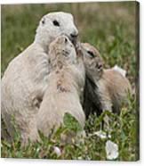 Prairie Kiss Canvas Print