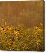 Prairie Wildflowers Canvas Print