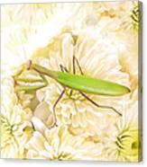 Praying Mantis On A Flower Boquet Canvas Print